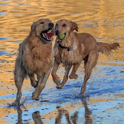 Dog Action Photography